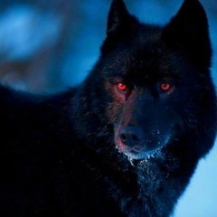 the black Wolf🐺